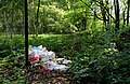 Rubbish in the nature J1.jpg