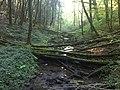 Ruisseau du Moulin Ratet - 1.jpg