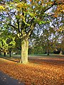 Ryelands Park, Lancaster - geograph.org.uk - 1701038.jpg