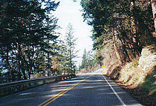 Trees forming a canopy over the Chuckanut Drive highway.