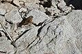 Sagarmatha National Park-Gorak Shep to Pheriche 2013-05-06 07-49-46.jpg