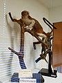 Saguinus oedipus - Pember Library and Museum - Granville, New York - 20180224 141529.jpg