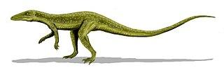 <i>Saltoposuchus</i> genus of reptiles