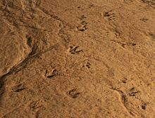 Sataplia. Dinosaur's prints (Photo A. Muhranoff, 2011).jpg
