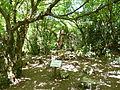 Sataplia P1000730 (11465714214).jpg
