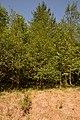 Schleswig-Holstein, Krumstedt, Landschaftsschutzgebiet Landschaftliches Hochmoor NIK 2413.jpg