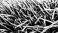 Seaweed (37403624085).jpg