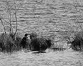 Seney National Wildlife Refuge - Special Assignment Black and White (9701951227).jpg