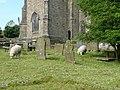 Sheep in the churchyard, Rylstone - geograph.org.uk - 1358082.jpg