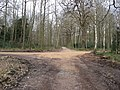 Sherwood Forest - Green Drive Intersection - geograph.org.uk - 730038.jpg