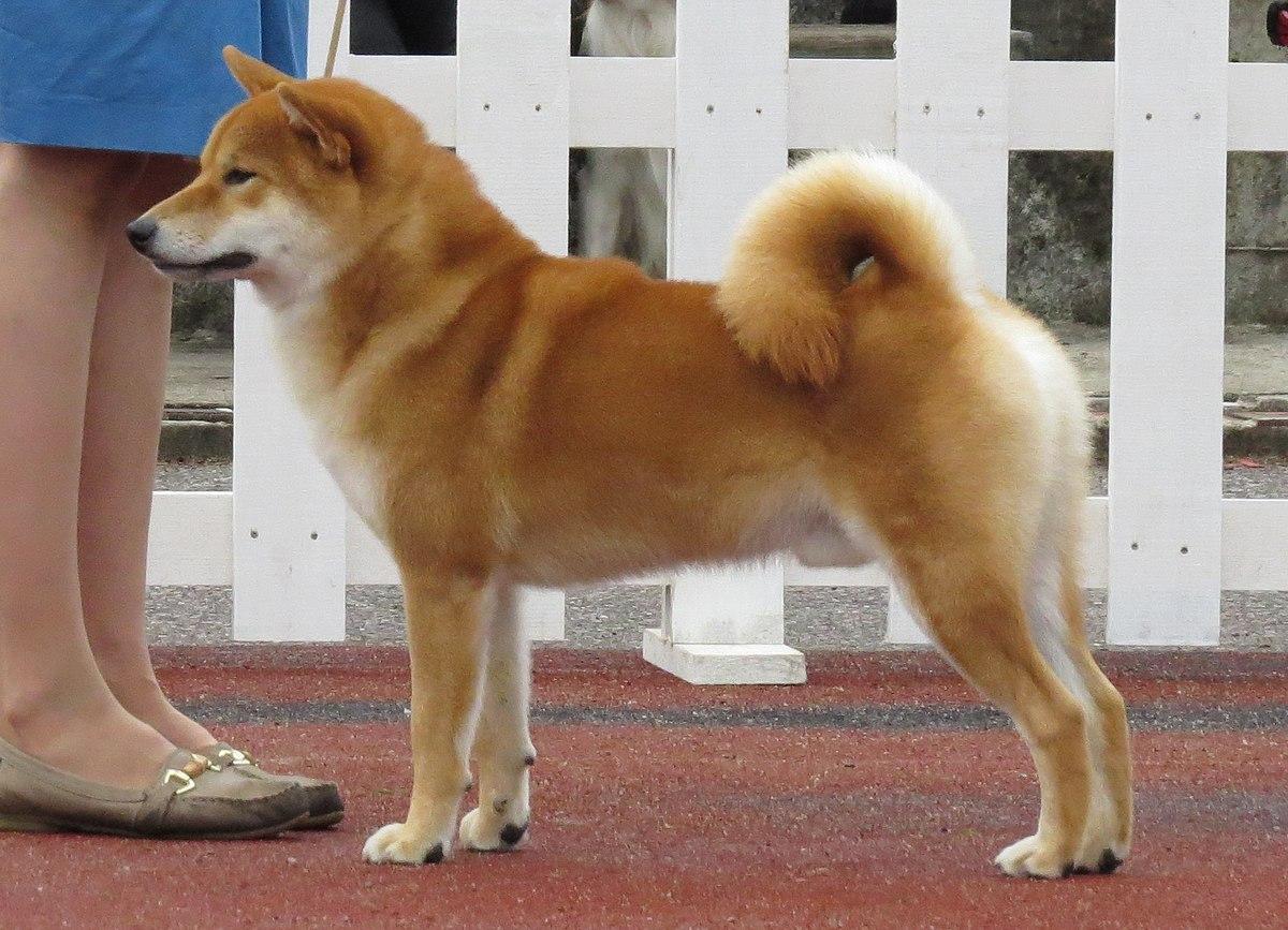 Третий сустав задней ноги собаки 6 букв боль в суставах ног при ходьбе у детей
