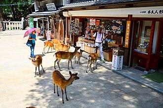 Nara, Nara - Deer approaching tourists in Nara Park in summer.