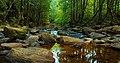 Sinharaja rain forest.jpg