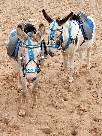 donkey donkey wikiwand