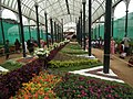 Snap from Lalbagh Flower Show Aug 2013 8361.JPG