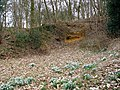 Snowdrops in the Bramerton Pits - geograph.org.uk - 1759834.jpg
