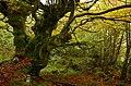 Sobrescobio, 33993, Asturias, Spain - panoramio.jpg
