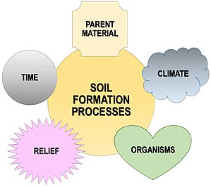 Pedogenesis - 5 factors of soil formation