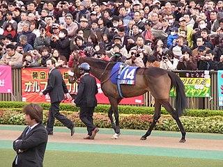 Solemia Irish-bred Thoroughbred racehorse