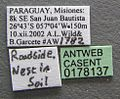 Solenopsis macdonaghi casent0178137 label 1.jpg