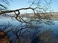 Spiegelungen im Hallwiler See.jpg