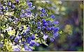 Spring Purpleness (206257917).jpeg