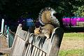Squirrel on bench in Saint James Park.jpg