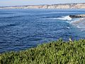 Squirrel watching over the coast in La Jolla (70336).jpg
