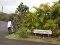 Starr-090319-5217-Metrosideros polymorpha-yellow flower form with Kim and Takeda-Enchanting Floral Gardens of Kula-Maui (24948869845).jpg