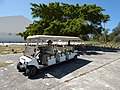 Starr-150326-0902-Ficus benjamina-Gym and Kim in stretch golf cart-Town Sand Island-Midway Atoll (24899453499).jpg