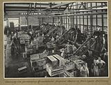StateLibQld 1 256040 Process workers at work at the Golden Circle cannery in Northgate.jpg