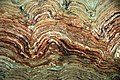 Stromatolites, Belt Supergroup, Glacier National Park.jpg