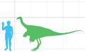 Struthiomimus altus scale.png