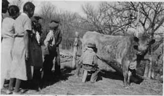 Porcupine, South Dakota - Students at Brave Heart Day School in Porcupine learn to milk a cow, Oct. 2, 1937