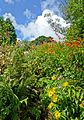 Summer colours at Trengilly Wartha, Constantine (7718282700).jpg
