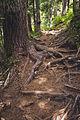 Summit Lake Trail 1177 — 011.jpg