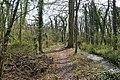 Surlingham Wood - geograph.org.uk - 1806517.jpg