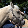 Swiss national stud farm Avenches-IMG 8536.jpg