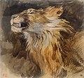 Tête de lion rugissant - Eugène Delacroix - MI 893, Recto - Artgs Graphiques - musée du Louvre.jpg