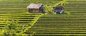 Tabanan-Regency Indonesia Rice-paddies-07.jpg