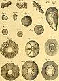 Tableau encyclopédique et méthodique des trois règnes de la nature (1791) (14581596400).jpg
