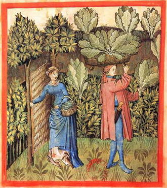Wattle (construction) - A woven wattle gate keeps animals out of the fifteenth-century cabbage patch (Tacuinum Sanitatis, Rouen)