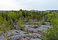 Taiga and bedrock outcrops behind Explorer Hotel, Yellowknife, NT.jpg