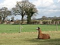 Taking a rest - geograph.org.uk - 740522.jpg