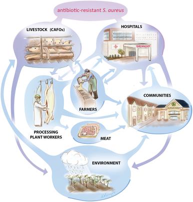 Antibiotic use in livestock - Wikipedia
