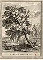 Tardieu-Oudry-La Fontaine-Le chêne et le roseau.jpg