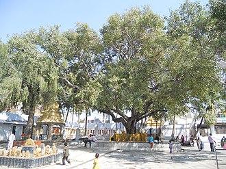 Hassan district - Lakshmi Narayana Swamy Temple, Dudda Taluk, Hassan