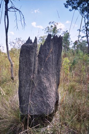 Eusociality - Termite mound: termites developed eusociality in the Jurassic period, over 145 million years ago.