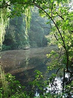 The Lake - geograph.org.uk - 578794