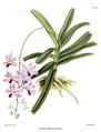 The Orchid Album-01-0146-0048-Vanda coerulescens.png